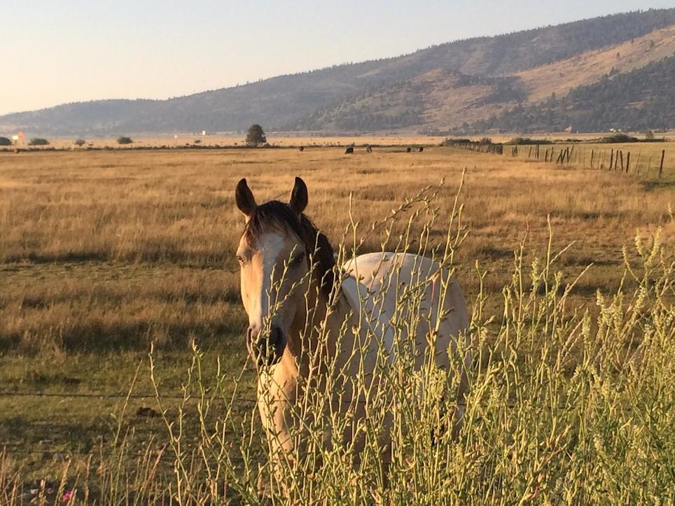 EAGALA – horse power to improve your mental health